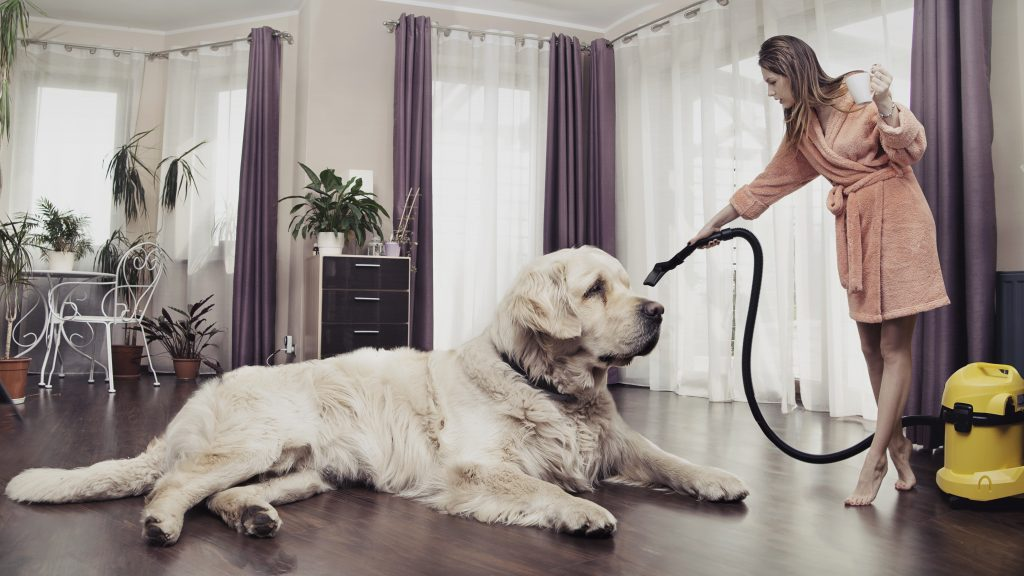 best vacuum for dog hair on hardwood floors
