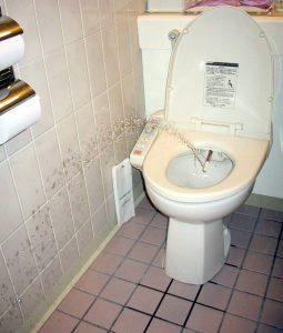 best bidet toilet combo reviews